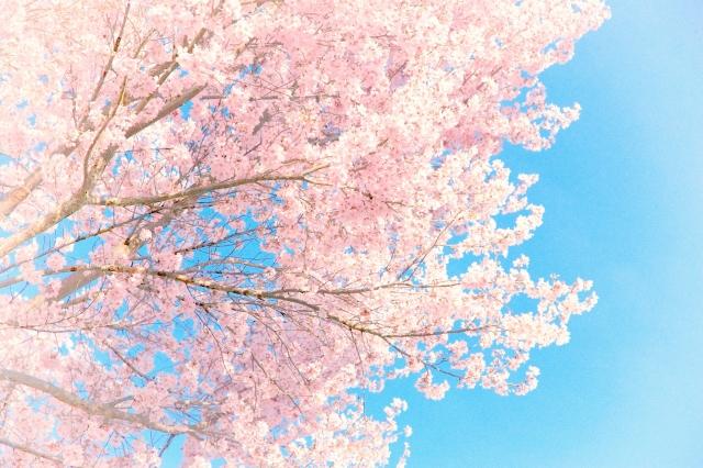 【会員制ラウンジ・高級キャバクラ】春は心機一転!新店舗で始めよう!